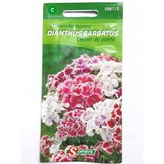 Dianthus Oeillet de poète C