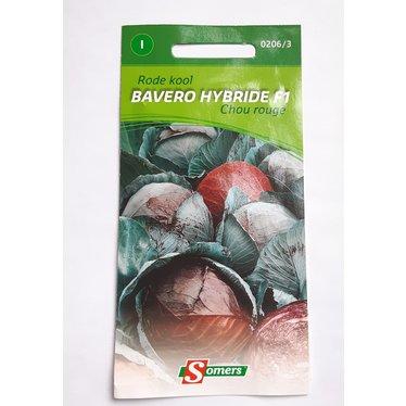 Chou rouge Bavero I