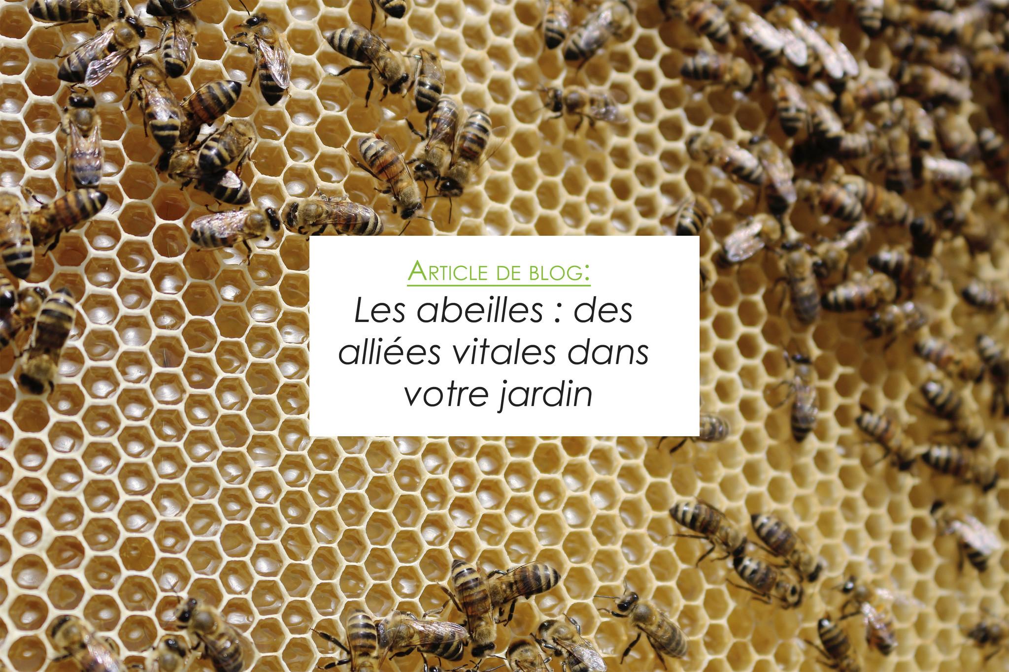 Les abeilles : des alliées vitales dans votre jardin