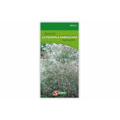 Gypsophila paniculata G
