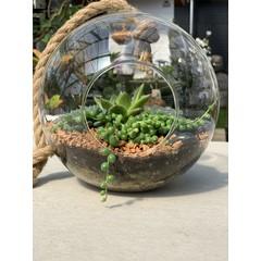 jardin de plantes interieurs