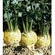 Celeri rave giant prague cel.10