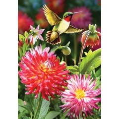 Drapeau dahlia et colibri