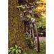 Carte vélo sur arbre