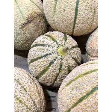 Melon de Montreal