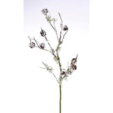 Tige enneigée avec cocottes et lichen