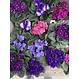 Violette africaine 4 po