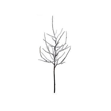 Branche enneigée twig