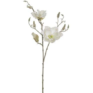 Tige magnolia enneigée blanche