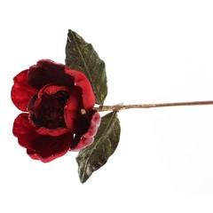 Tige de magnolia rouge