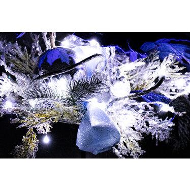 Arrangement poinsettia bleu