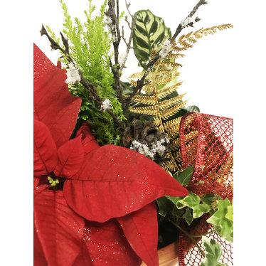 Arrangement naturel poinsettia de Noël - terracotta