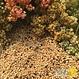 Quinoa Arc-en-ciel Bio