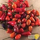 Piment Fort Chinese Five Color Bio