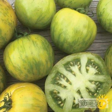 Tomate verte Green Zebra