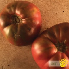 Tomate Mauve Cherokee Purple bio