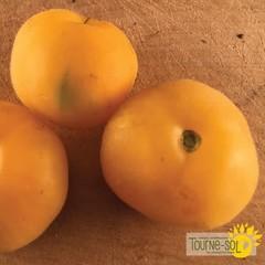 Tomate jaune Wapsinicon Peach bio