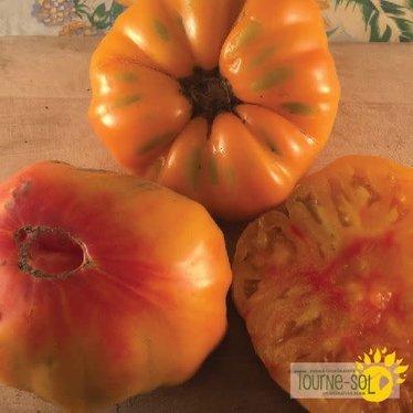 Tomate orange Stripped German bio