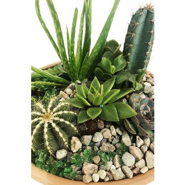 Jardin de plantes intérieures PJ-06