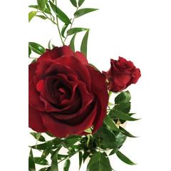 Rose rouge SV-017
