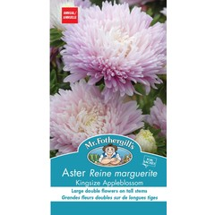 Aster Kingsize Blossom