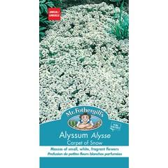 Allysum Carpet of Snow