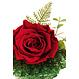 Rose éternelle rouge SV-018