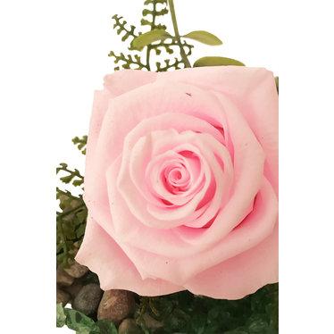 Rose éternelle rose SV-019