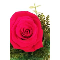 Rose éternelle fushia SV-020