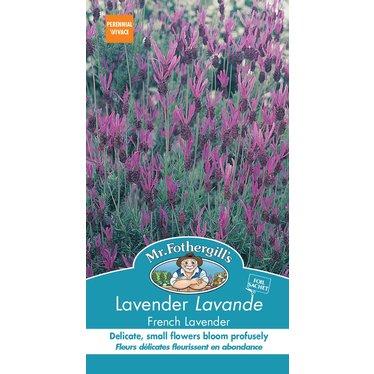 Lavande French Lavender