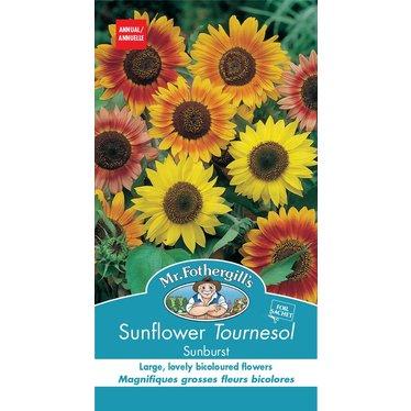 Tournesol Sunburst