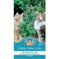 Herbe à chats ( Nepeta)