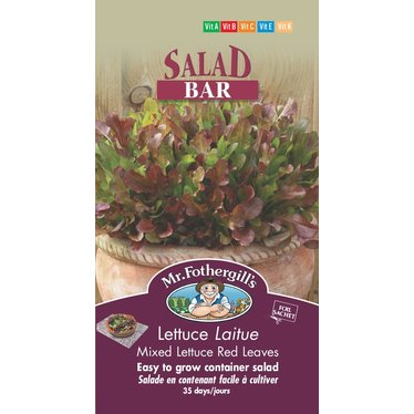 Laitue Mixed Lettuce Red Leaves