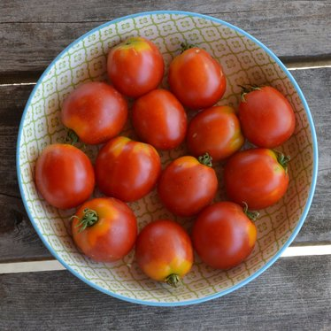Tomate standard Glacier Bio