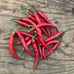 Piment Cayenne ring of fire bio