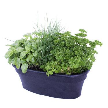 Balconnière Fines Herbes