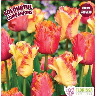 Tulipe Tropical Twist (paquet de 14 bulbes)