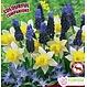 Trio de bulbes Spring Cheer (paquet de 36 bulbes)