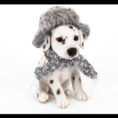 Dalmatien avec chapeau et foulard