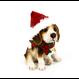 Beagle avec tuque et foulard