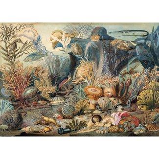 Peter Pauper Press Ocean Life 1000 pc
