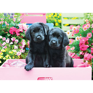 Eurographics Puzzles Black Labs in Pink Box 500 pc Puzzle