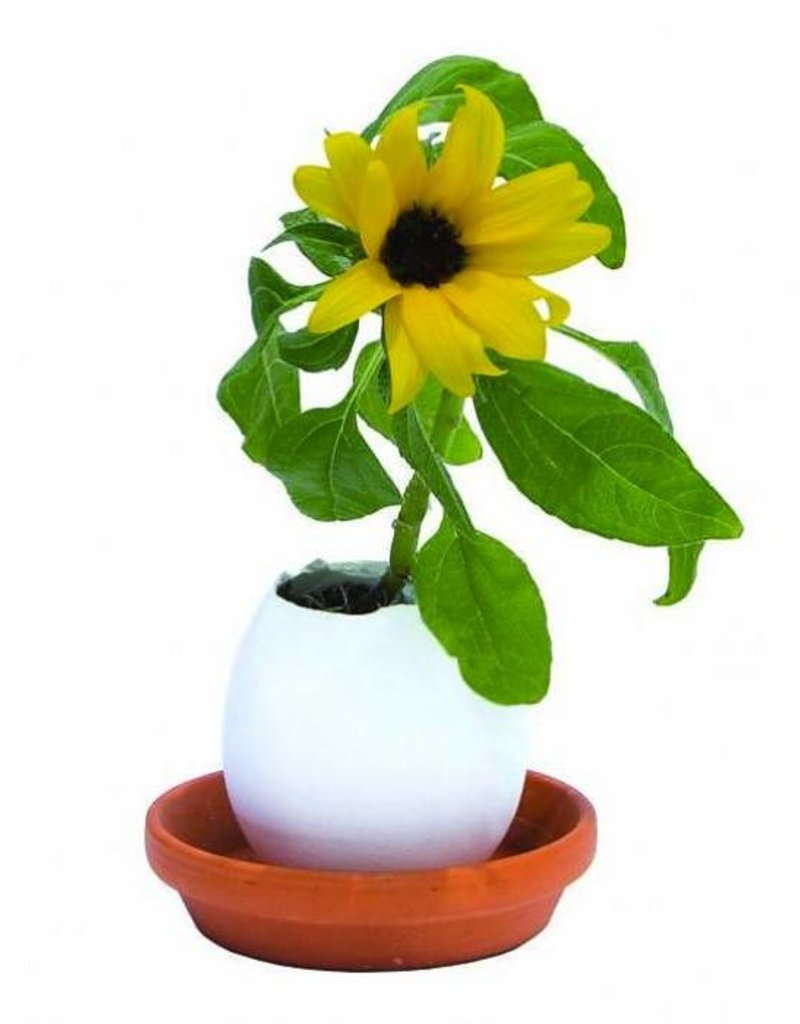 Eggling - Planter Kit - Basil