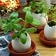Eggling - Planter Kit - Prickly Cactus