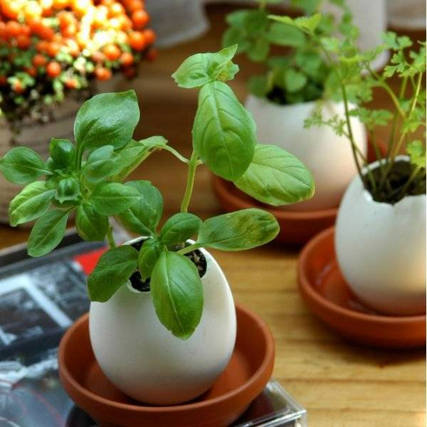 Eggling - Planter Kit - Wild Strawberry