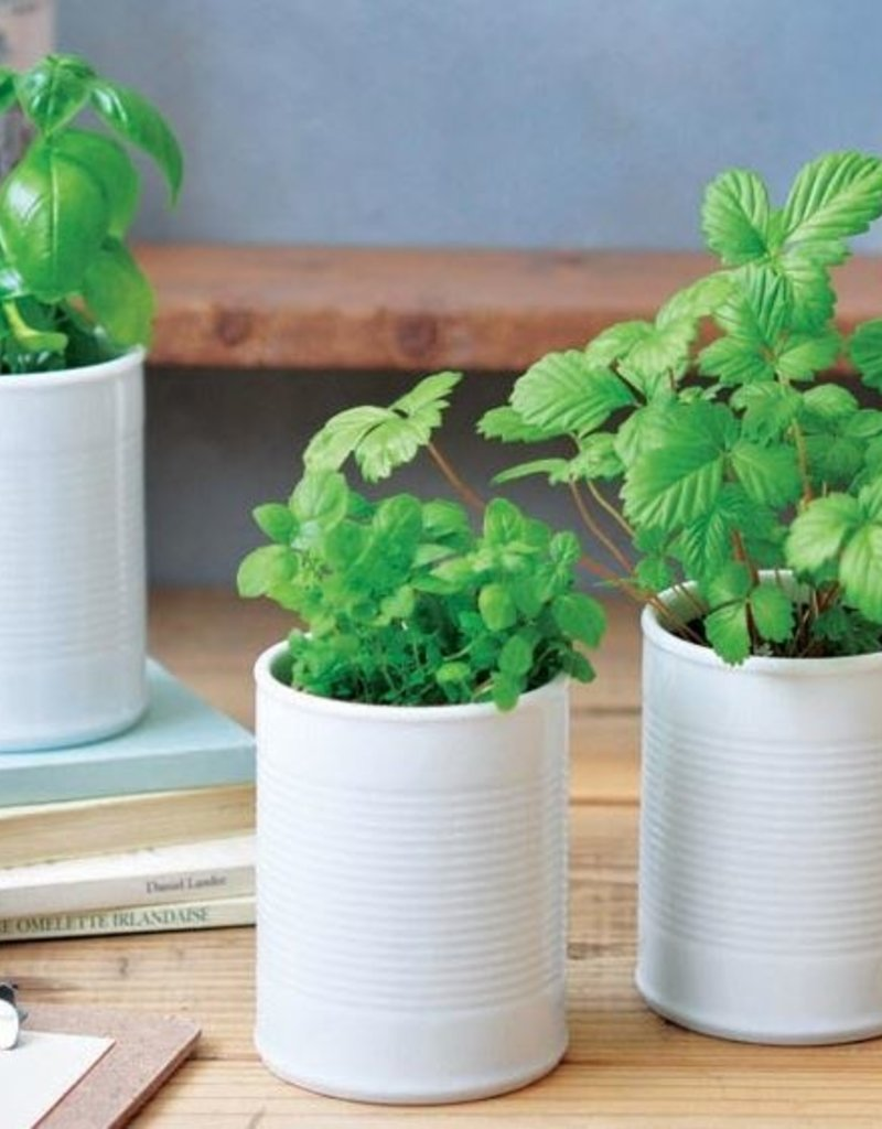 GD748CAN + PLANT - White - Assorted 4 Styles
