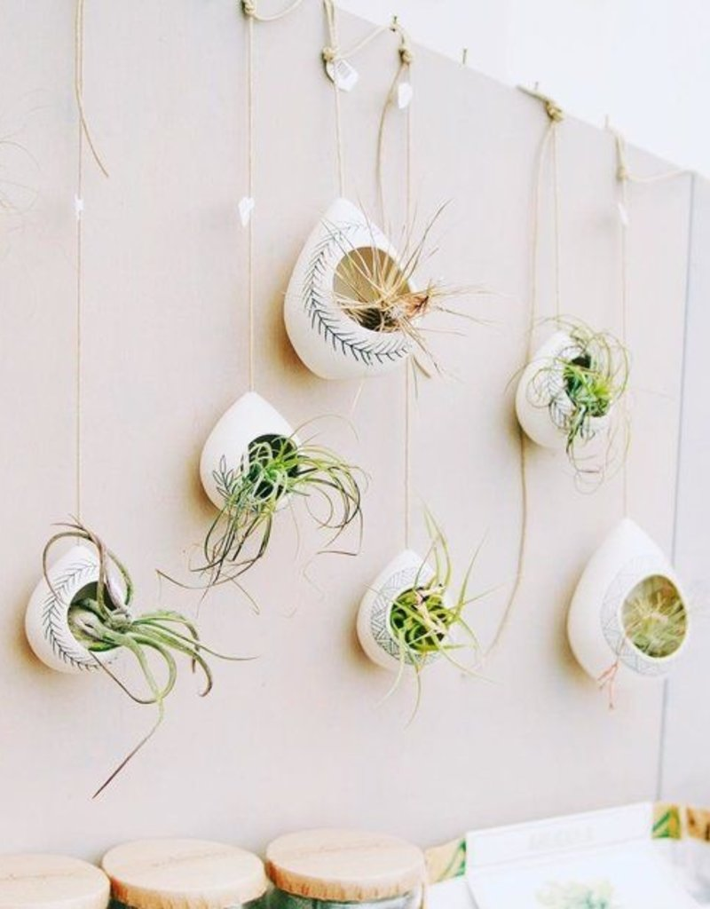 Benotti Air Plant Pod small