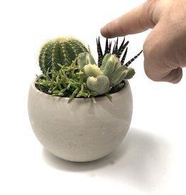 Mini cactus bowls