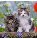 Ravensburger Tigers Kittens 3 x 49