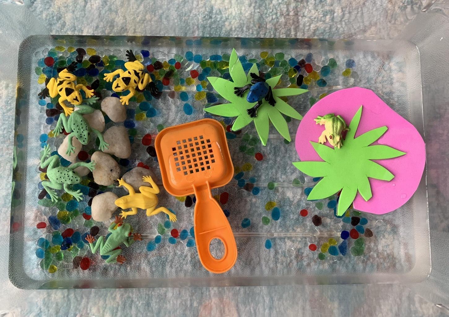 Lila Made A Frog Habitat!